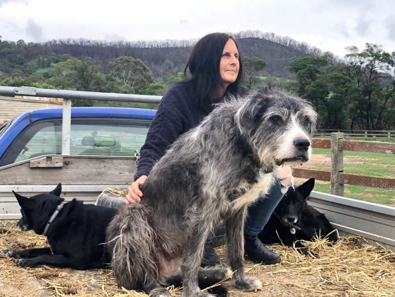 After the fires, 1080 baits pose new problem for animal sanctuary